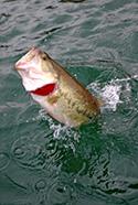 bass-fishing-giveaway